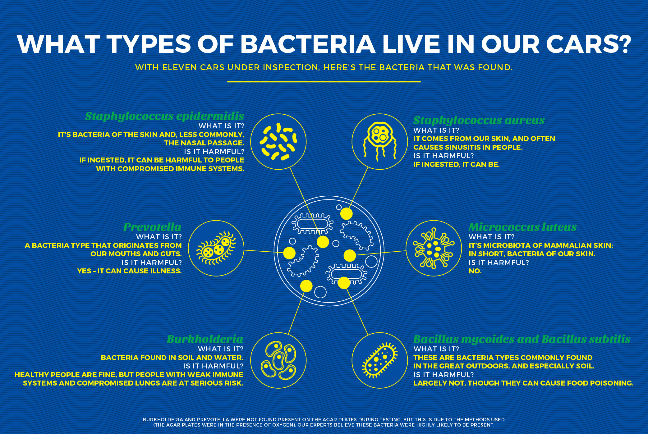 type of germs found in cars